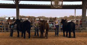 County Fair Texas